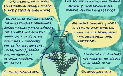 Beneficios que nos traen las plantas